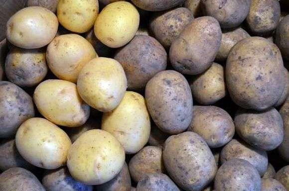 Сорт картофеля «Гала»
