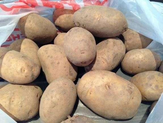 Сорт картофеля «Леди»