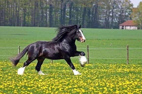 Как ухаживать за лошадьми?