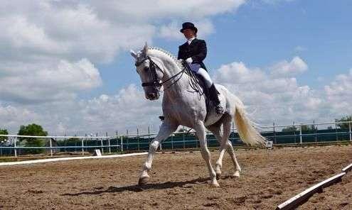Как тренировать лошадь?