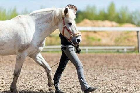 Воспитание лошадей