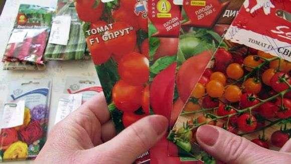 Выращивание и уход за томатами