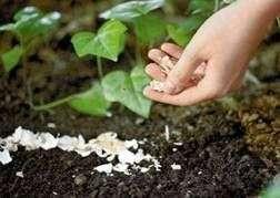 Методы борьбы со слизнями в саду