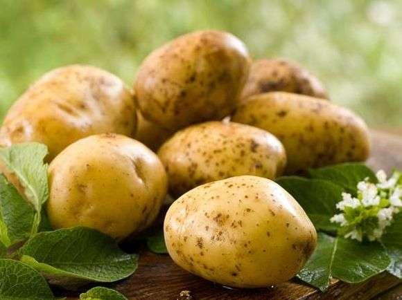 Уладар сорт картоплі