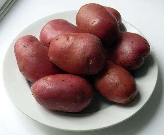 Сорт картофеля «Рокко»