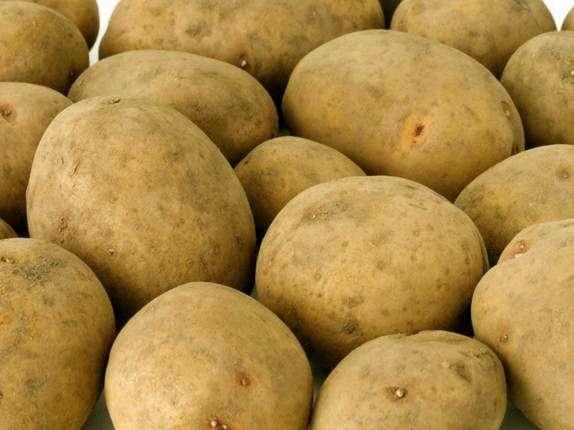 Сорт картофеля «Бриз»
