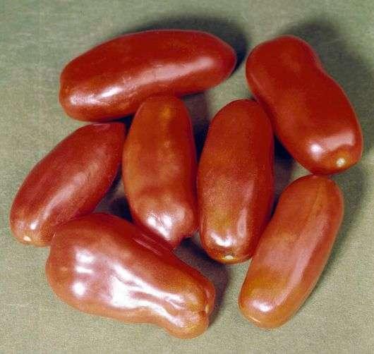 Сорт томатов «Московский деликатес»