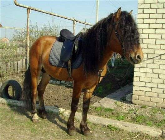 Печорская порода лошадей