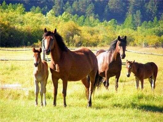 Как одомашнили лошадь