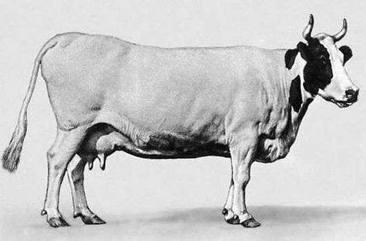 Истобенская порода коров