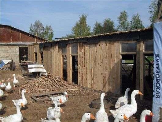 Помещения для гусей