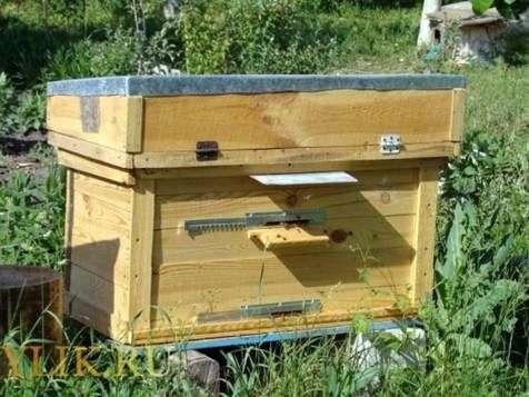 Пчёлы улей своими руками