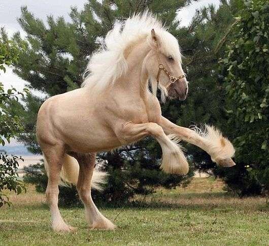 Английские породы лошадей