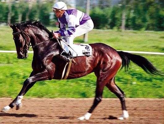 Лошади чистокровной верховой породы