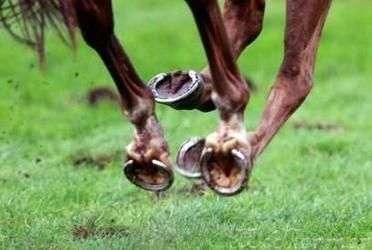 Как подковать лошадь