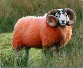 Интересные факты об овцах