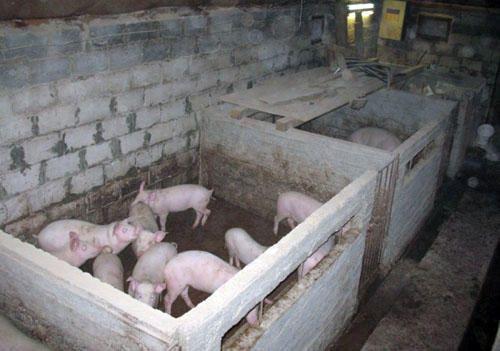 Как построить сарай для свиней своими руками