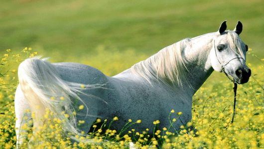 коневодство